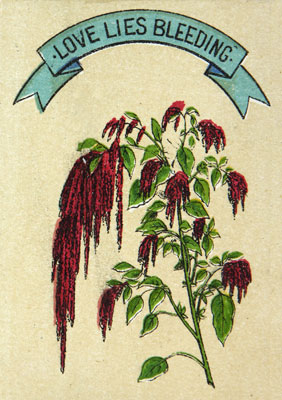 Love lies bleeding plant. Catalogue reference: COPY 1/77 (99b)