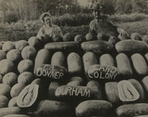 Donner melon patch on Durham state settlement, California