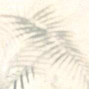 COPY1-417-500 Close up on the palm tree