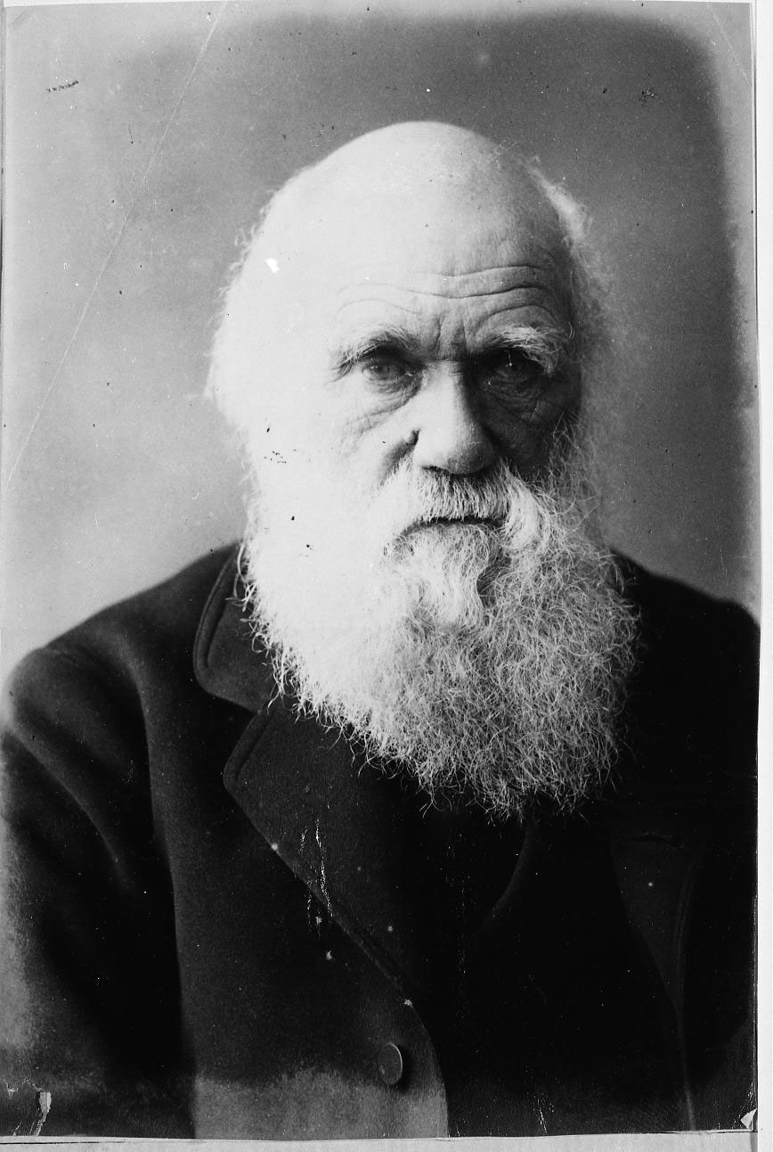 COPY1/56/767 1879 Darwin
