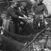 COPY1/490 (384) Close up of the men with the nets and the fish