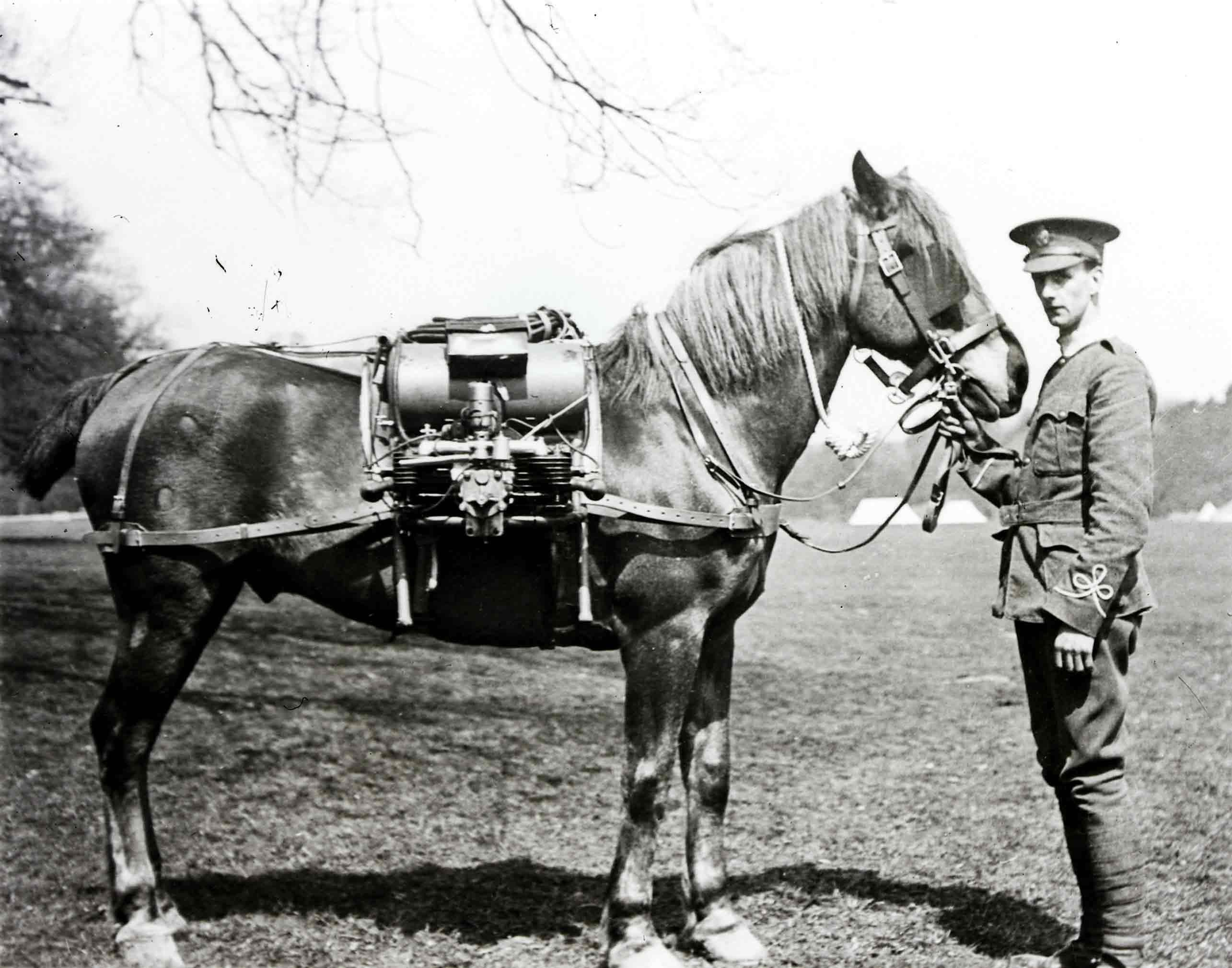 Cavalry horse wearing a field radio (BT Archives cat ref: TCB 475/YK 9)