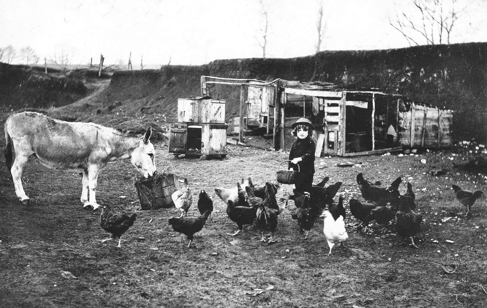 Image of a black and white photograph of a young boy feeding a group of chickens in a farmyard
